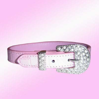 big dog collar