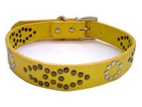 pet collars leash