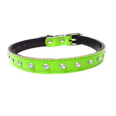 spike dog collars