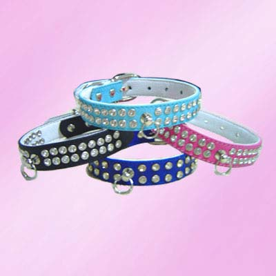 designer dogs Collars