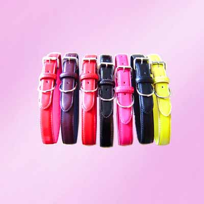 pet stylish collar