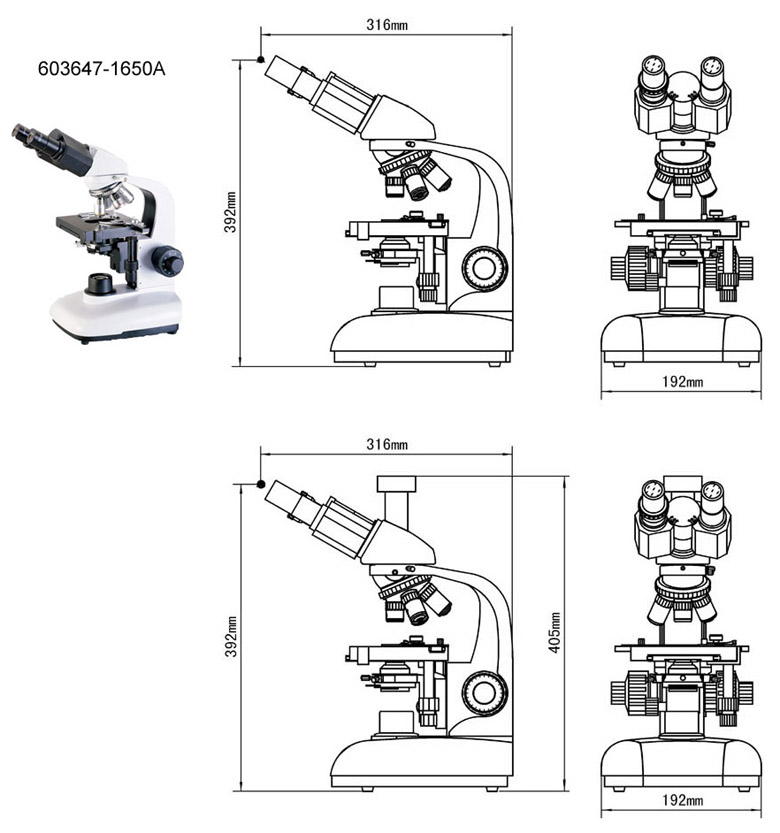 compound microscope
