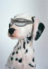 Pet Products-Dog Goggles