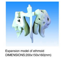 Expansion models