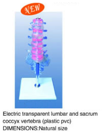 Electric transparent lumbar