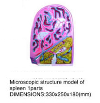Microscopic structure