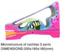 cochlea 3 parts