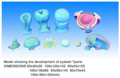 eyeball 7parts