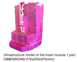 Ultrastructure model