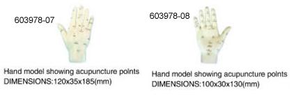 Hand Model