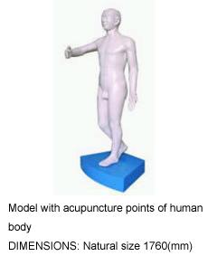 human  bodys