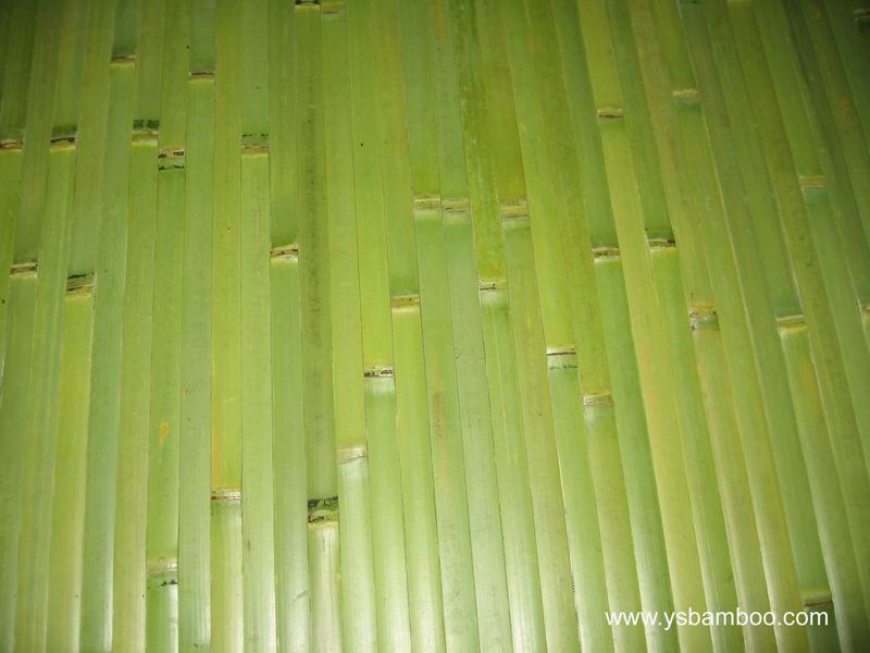 green natural bamboo wallpaper