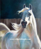 Animal   Horse oil painting