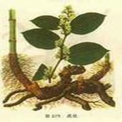 Resveratrol Polygonum cuspidatum P.E.Resveratrol