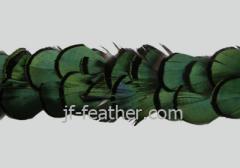 pheasant feather trim