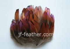 Fancy Feather