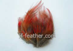 Feather Breast Flower