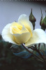 Realistic Floral Oil Painting
