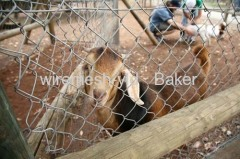 Chain Link Animal Fence