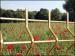 Garden Fencings
