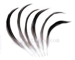 fancy duck feather