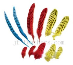 Fancy pheasant feather