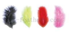 fancy turkey feather