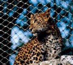 zoo fencing