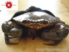 Mub Crab