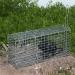 dog cage trap