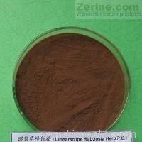 Linearstripe Rabdosia Herb