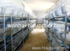 poultry farm layer chicken cage