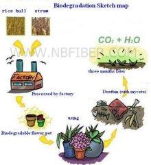 Biodegradation Sketch map
