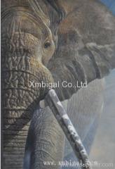 Animal elephant oil painting