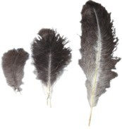 Ostrich Feather Bundled