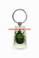 real insect green chafer beetle keychains,lucite keyring,unique gift