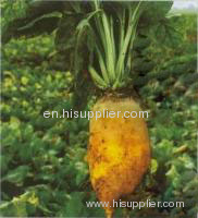 Beta Vulgaris extract(jesslie at snowlotusbiotech dot com)
