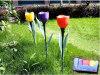 tulip solar light