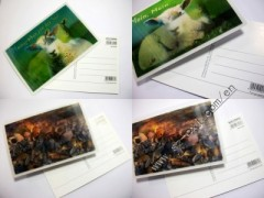 3D post card