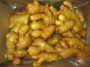 fresh ginger of carton, pvc or mesh bag