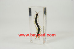 real insect amber lucite paperweights,business gift