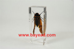 real insect clear lucite paperweights,science displays,insect displays