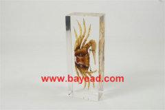 real insect amber lucite paperweights,insect collections,bug collections