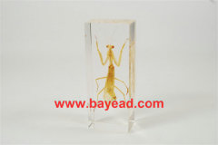 real bug clear resin lucite paperweights,business gift,office gift,priemium gift