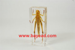 real insect amber lucite paperweights,science gifts,teacher gifts