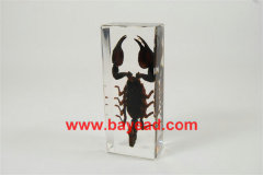 real insect amber lucite paperweights,bug gifts,bug displays,teaching displays