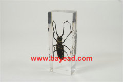 real insect amber lucite paperweights,unique gifts