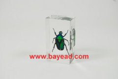 real insect amber lucite paperweights,special gifts,executive gifts