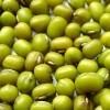 Organic mungbean