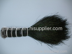 Filament of peacock feather